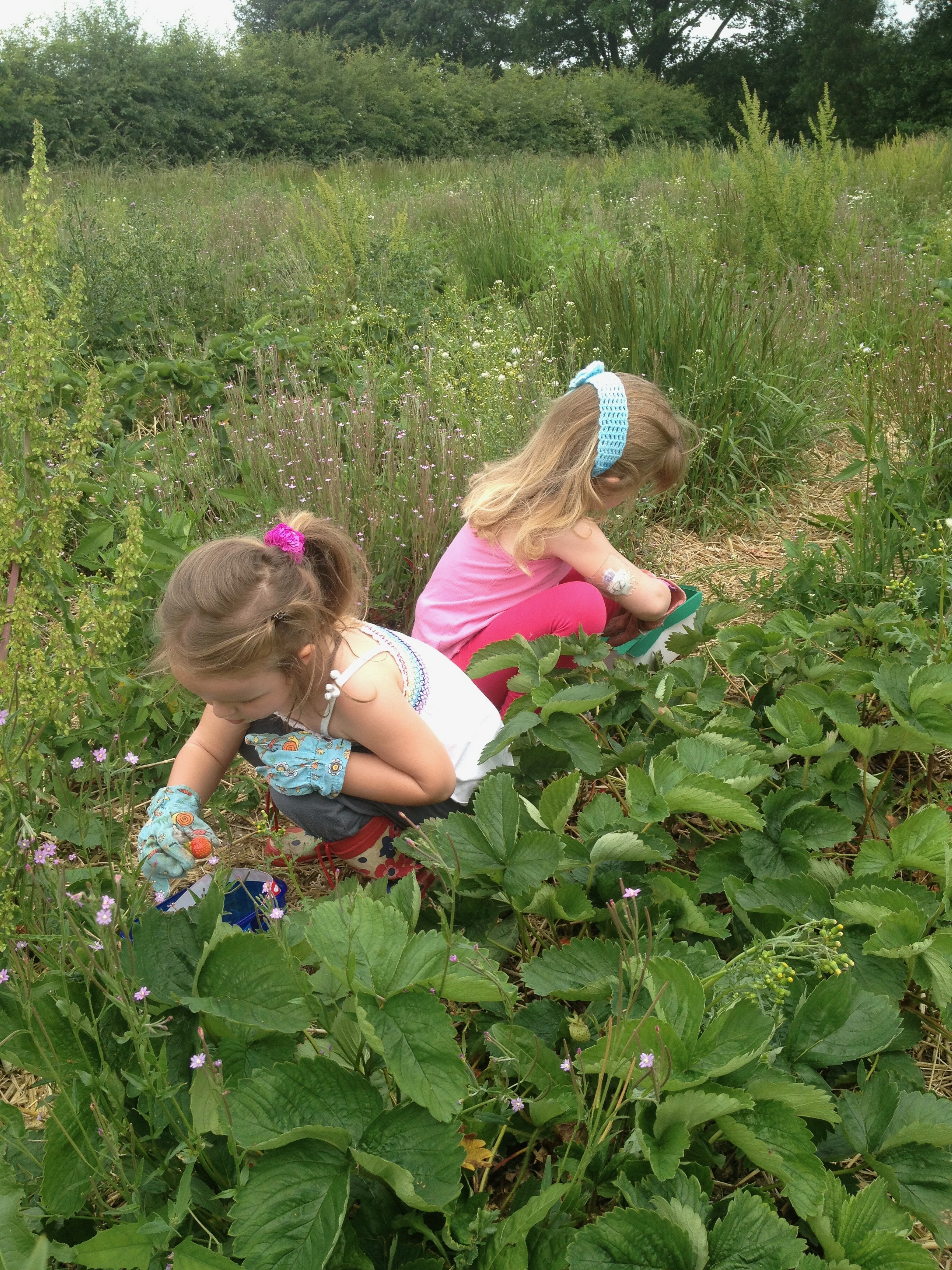 kids fruit picking